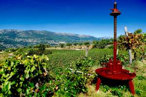 Provence Wine Tour - Grape press, Bellet PDO