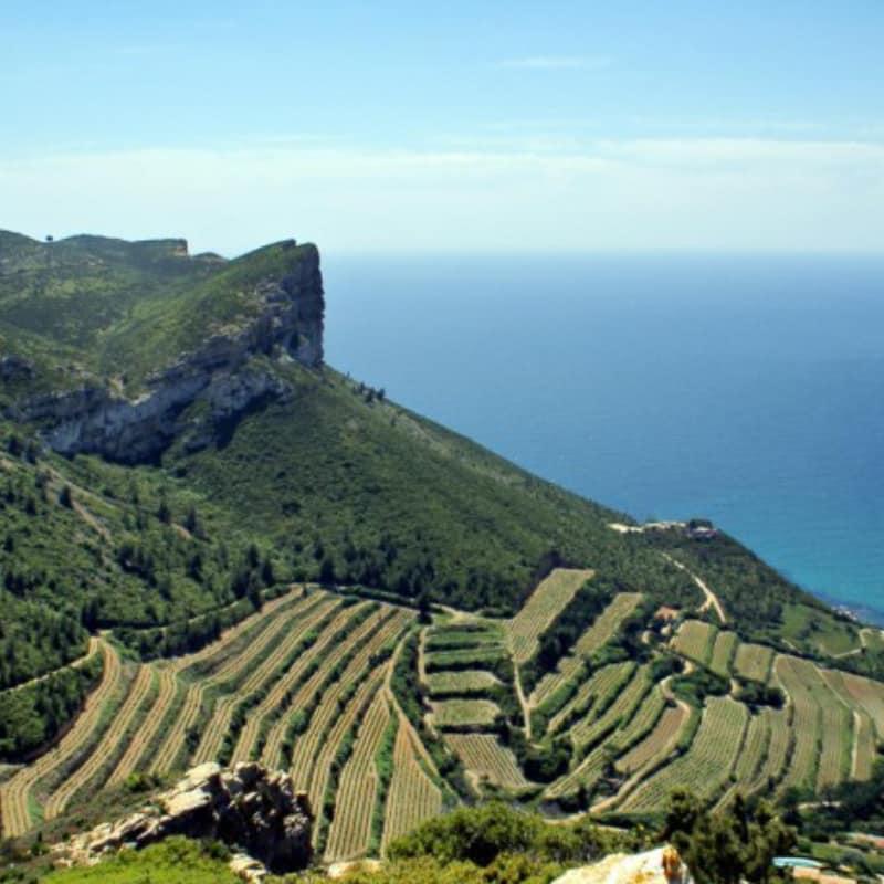 Vignobles cassis vins