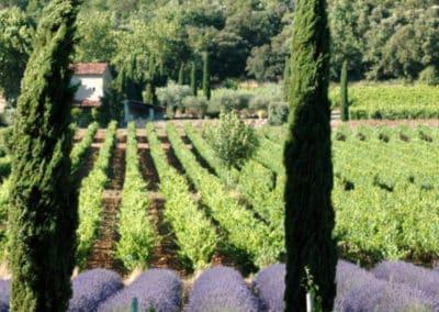Provence Wine Tours - Organic wineries Coteaux d'Aix and Lubéron2
