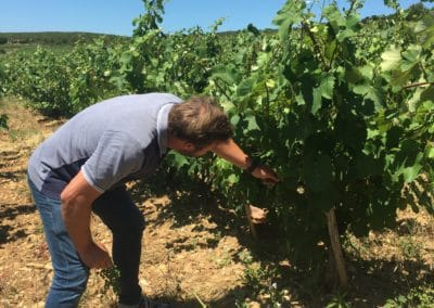 Provence Wine Tours - Winemaker in Bandol checking his vines
