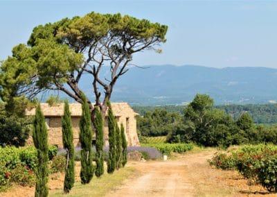 Provence Wine Tour - Wine Estate in Lubéron