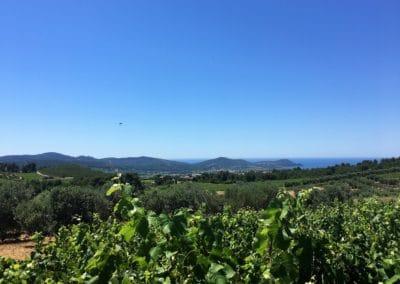 Provence Wine Tours - Vineyard from Domaine de la Suffrène in Bandol, Provence