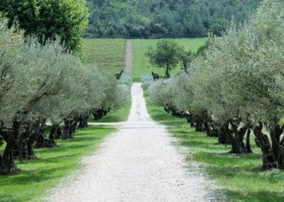 Provence Wine Tours - A path in a wine estate, surrounded by olive trees