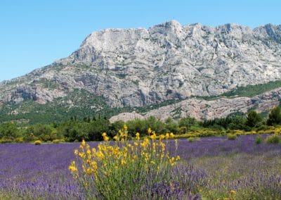 Provence Wine Tours - At the foothills of the Sainte-Victoire, lavender and broom.