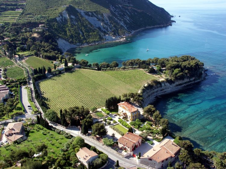 view-Cassis-sea and vinyards