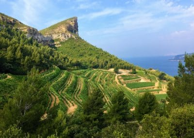 Provence Wine Tours - Plane view of a wine property in Cassis, with a sea background