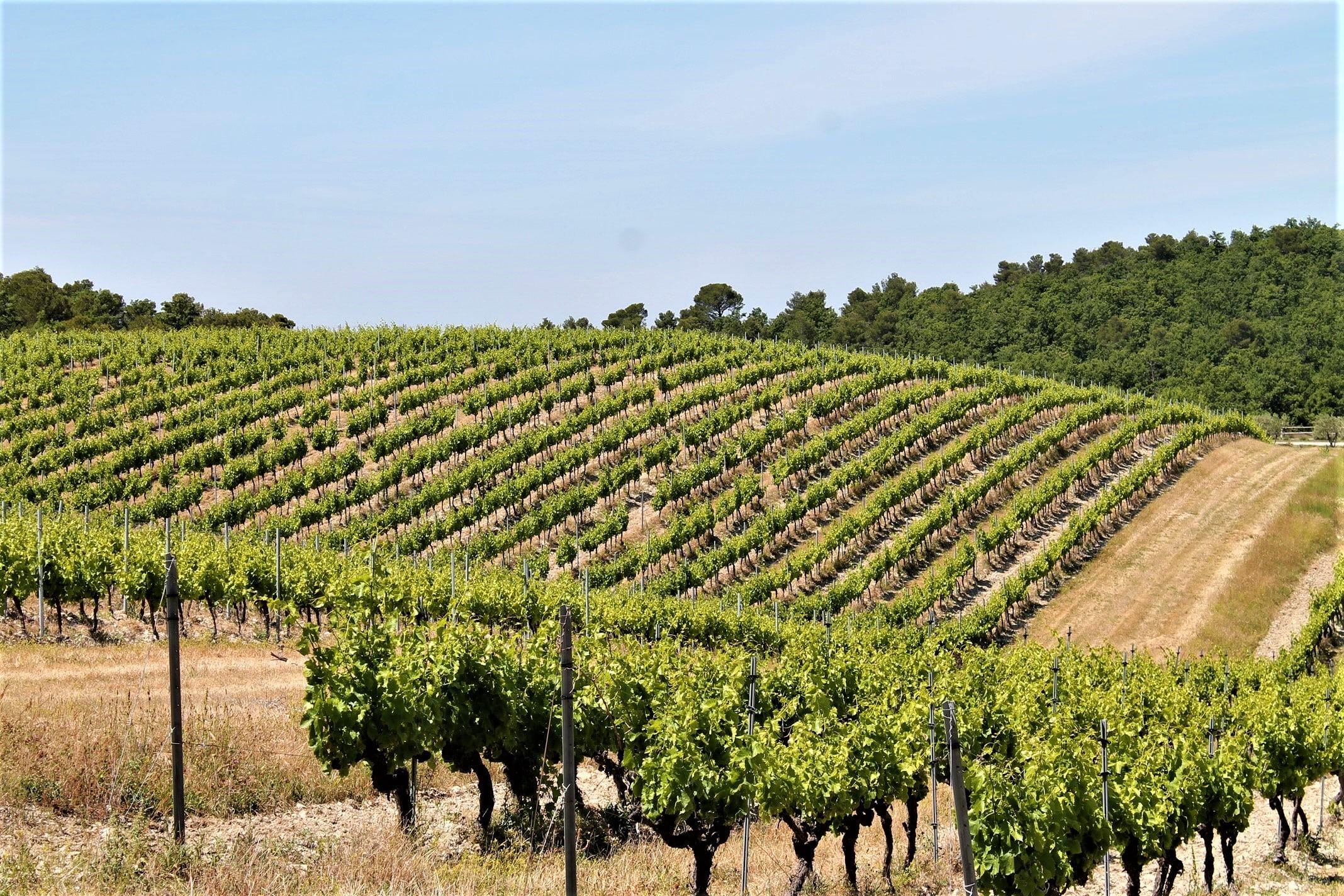 Wine-Tour-Gigondas-Vacqueyras